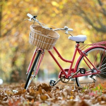 Street-bike-autumn-leaves_1280x800
