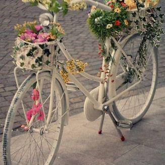 bike 31